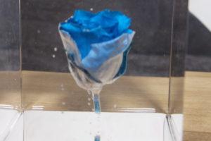 「COOL A*RT 3Dプレミアム」と青薔薇で制作