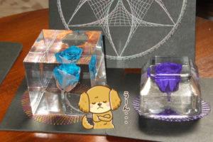 固めるハーバリウム 制作一週間後の様子-青薔薇と紫薔薇